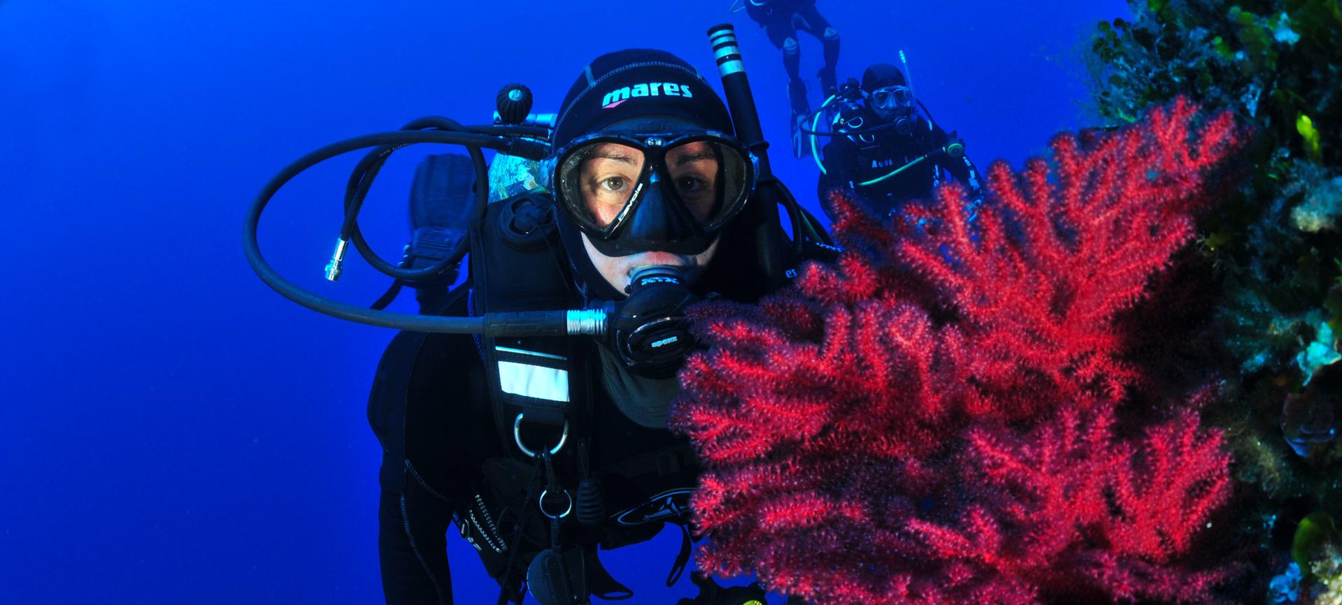 immersioni-ricreative-fr | Tavolara Diving Center